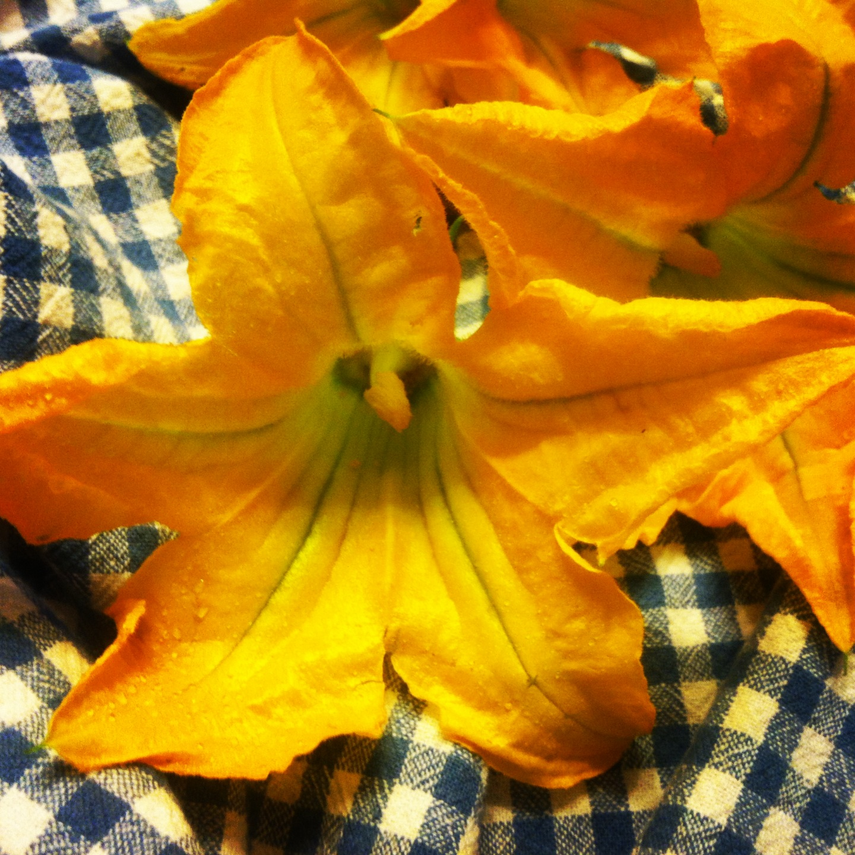 zucchini flower u201cpitei u201d u2013 carlofuda